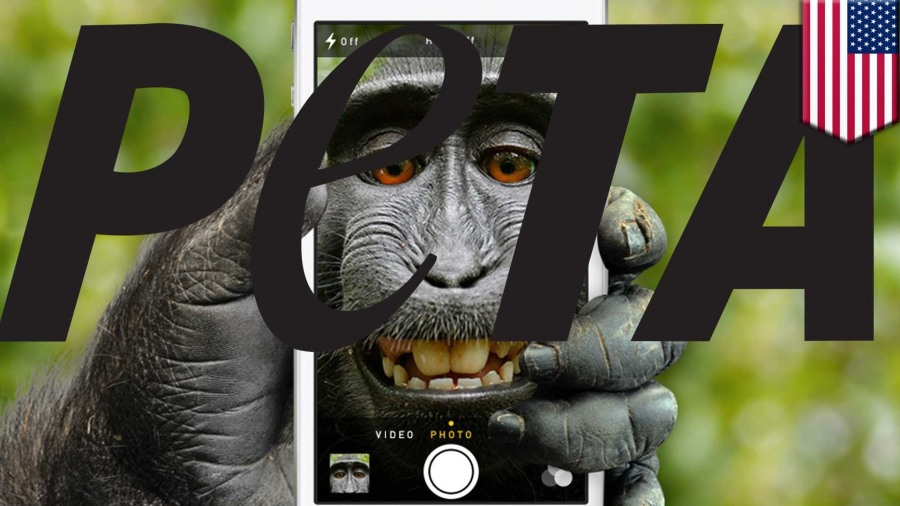 Selfies of Macaque Drive PETA to Sue for Monkey's Copyrights ;)